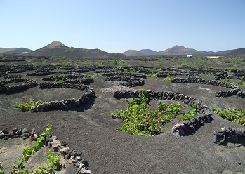 La Geria veinipiirkond Lanzarote saarel